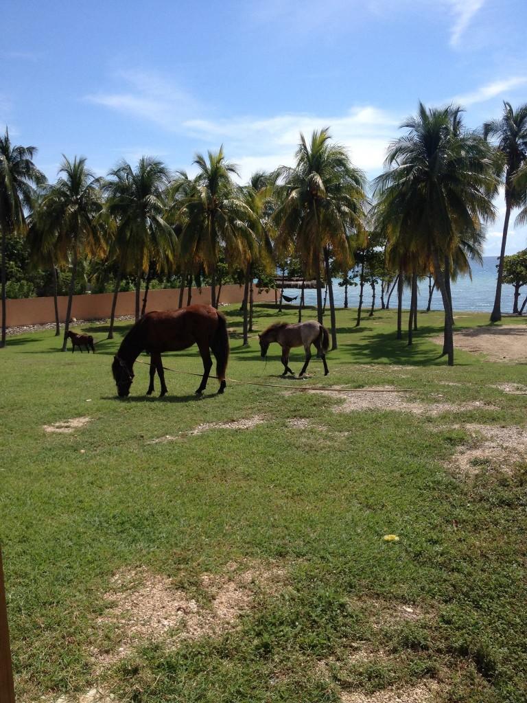 Beach church horses